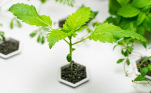 A Detailed Guide to Hydroponics Indoor Growing Systems for Weed
